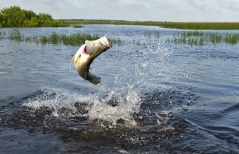 """Небольшой рассказ """"На рыбалке"""""""