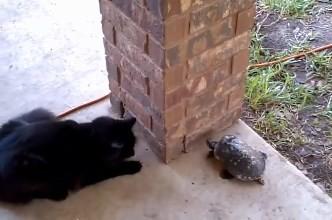 Котенок играет с черепашкой