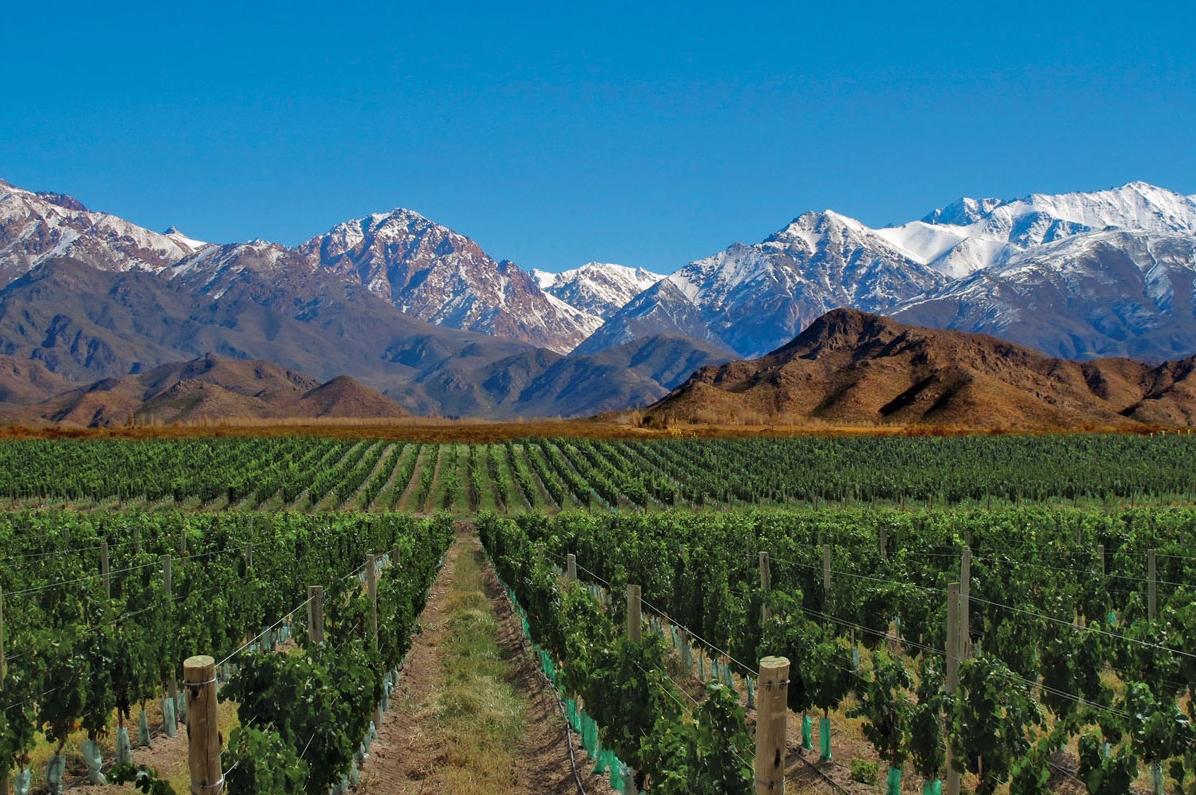 Виноградники провинции Мендоса