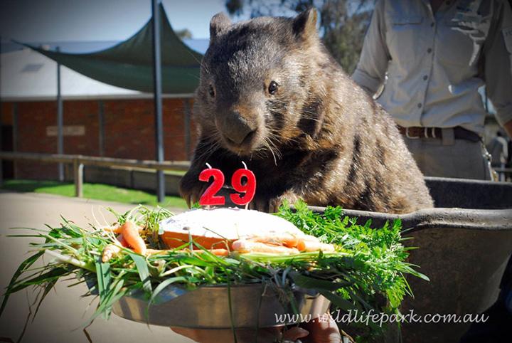 День рождения Патрика