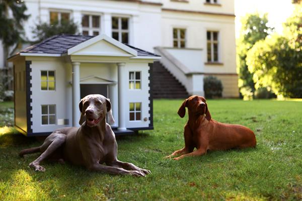 Домик для собаки фото 5