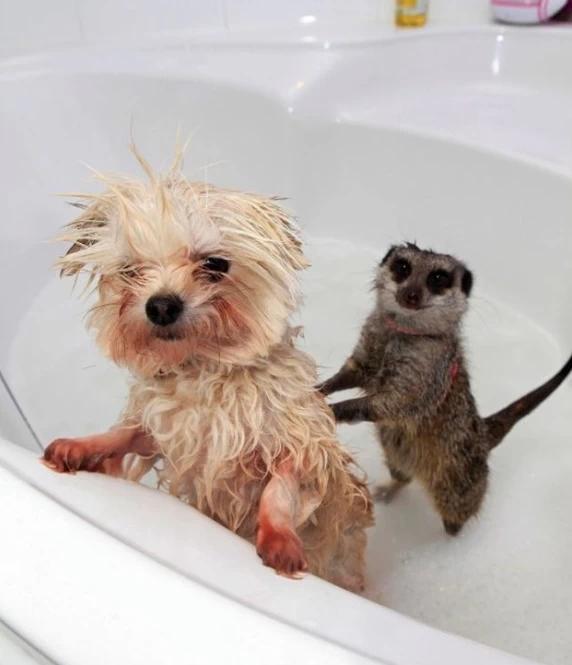 Животные в воде 10