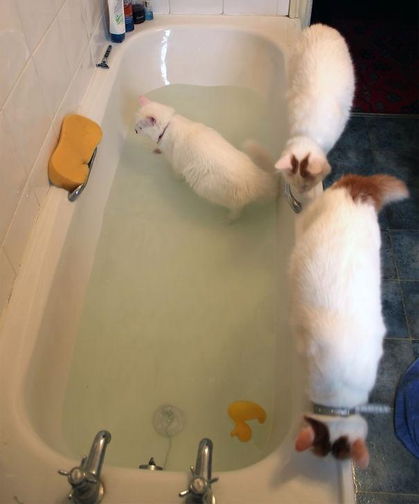 Животные в воде 15
