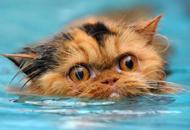 Животные в воде 18