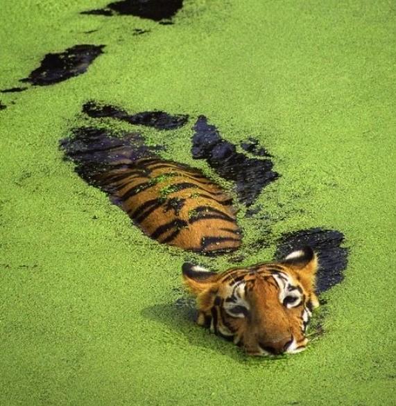 Животные в воде 7