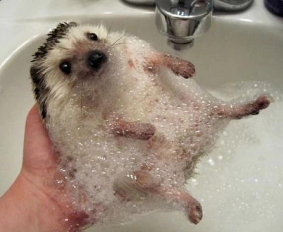 Животные в воде 1
