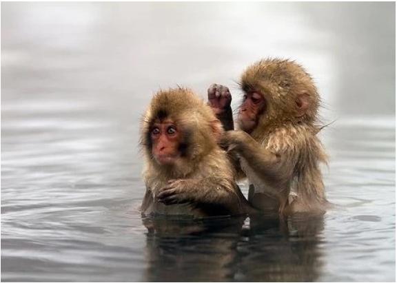 Животные в воде 13