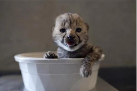 Животные в воде 2