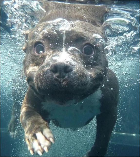 Животные в воде 5
