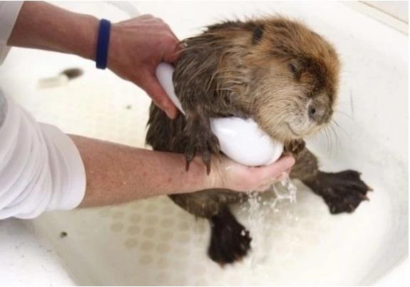 Животные в воде 8
