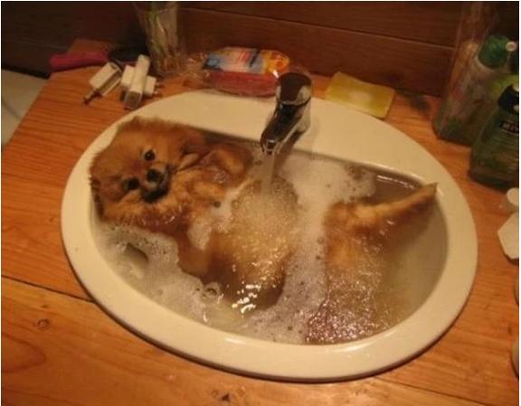 Животные в воде  9