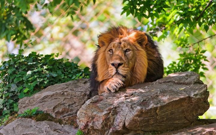 Скорость бега лева