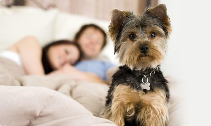 Факты о собаках, фото 1