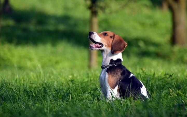 Факты о собаках 2