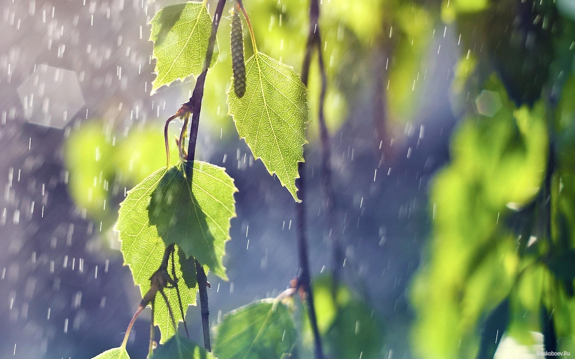 фото дождя 9