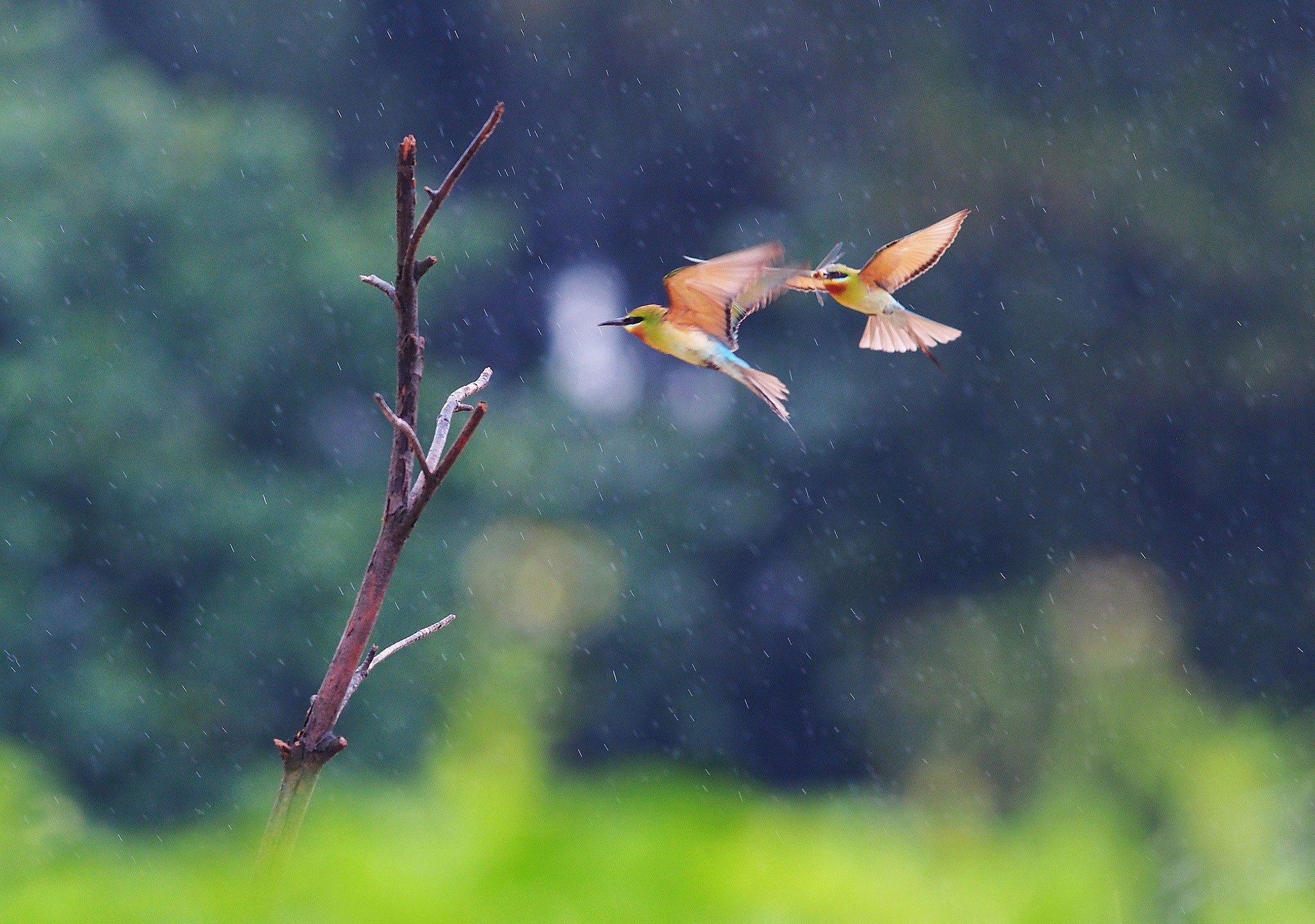 фото дождя 10