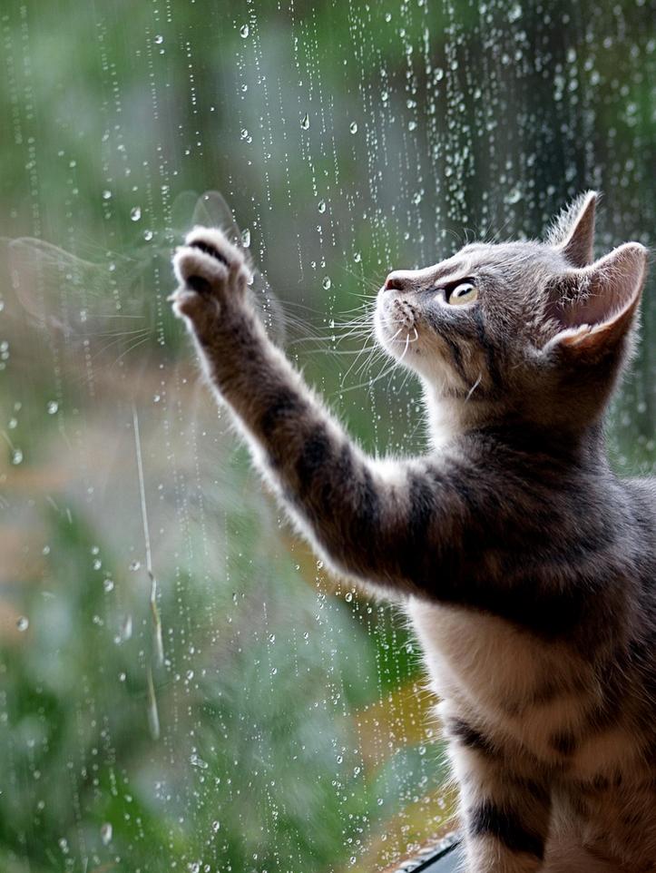 фото дождя 12