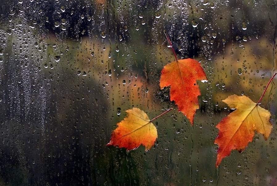 фотографии дождя 1
