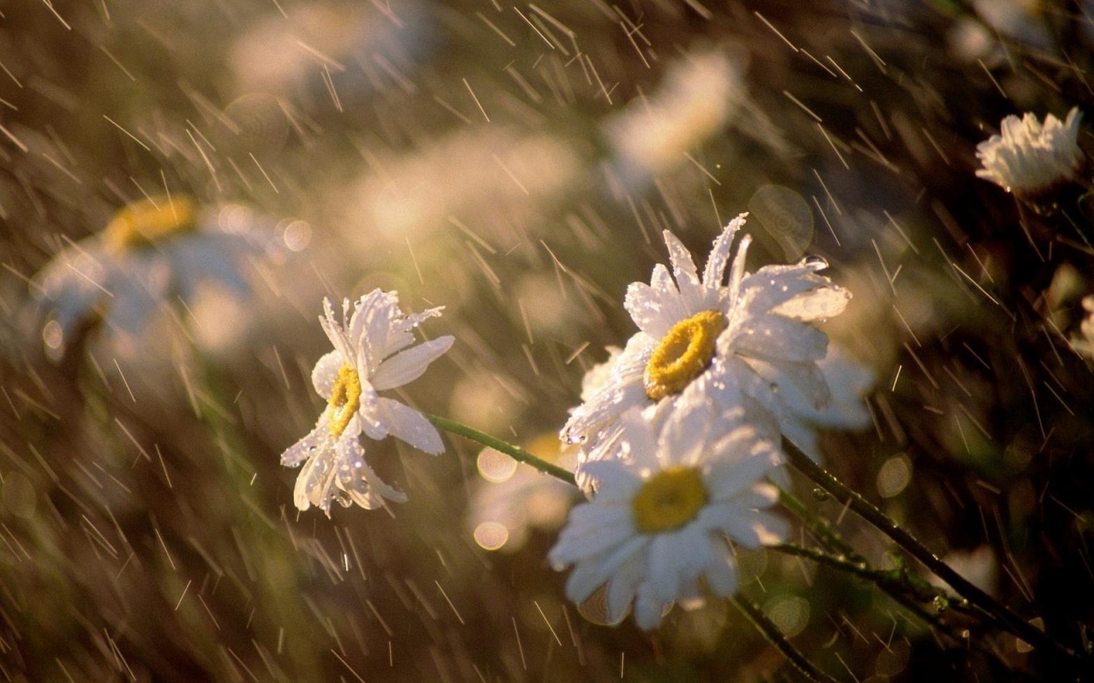 фотографии дождя 3