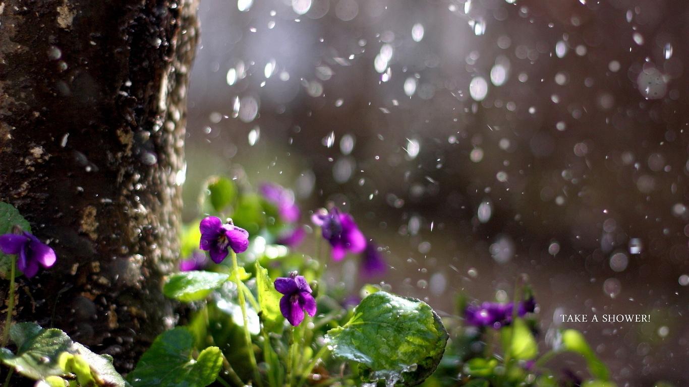 фото дождя 5
