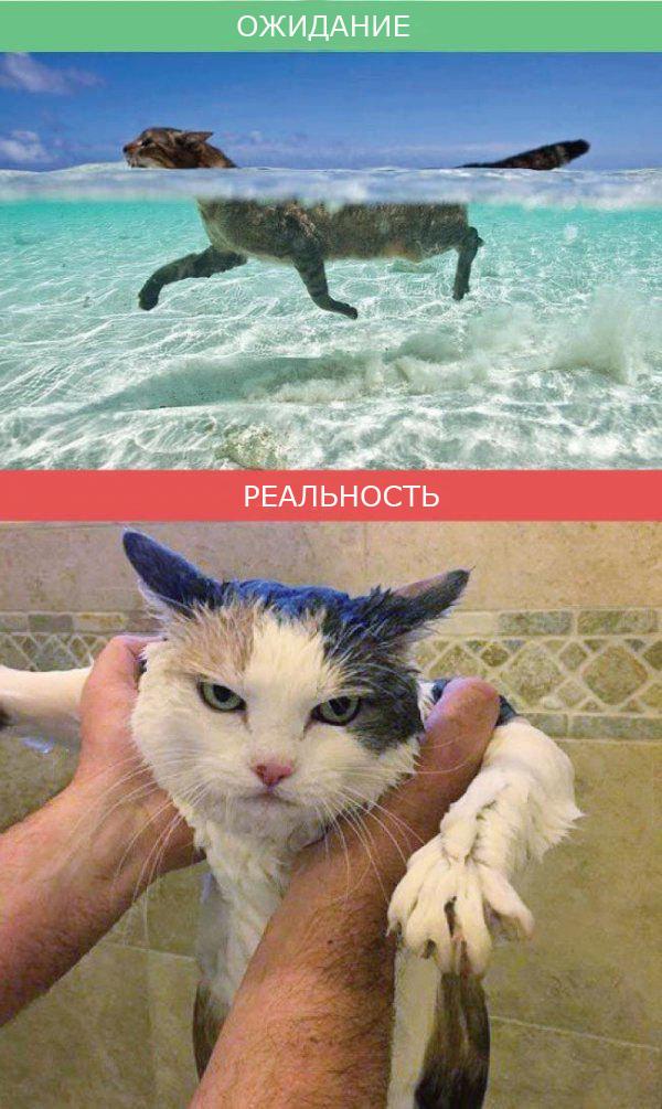 Кошки - ожидание и реальность