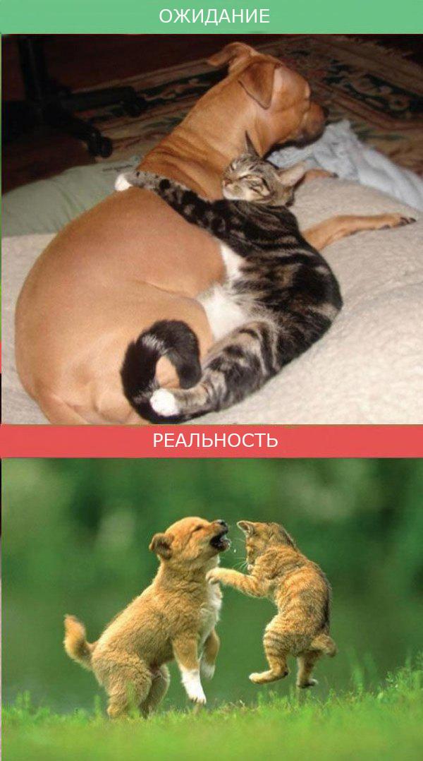 Жизнь с кошкой фото 2
