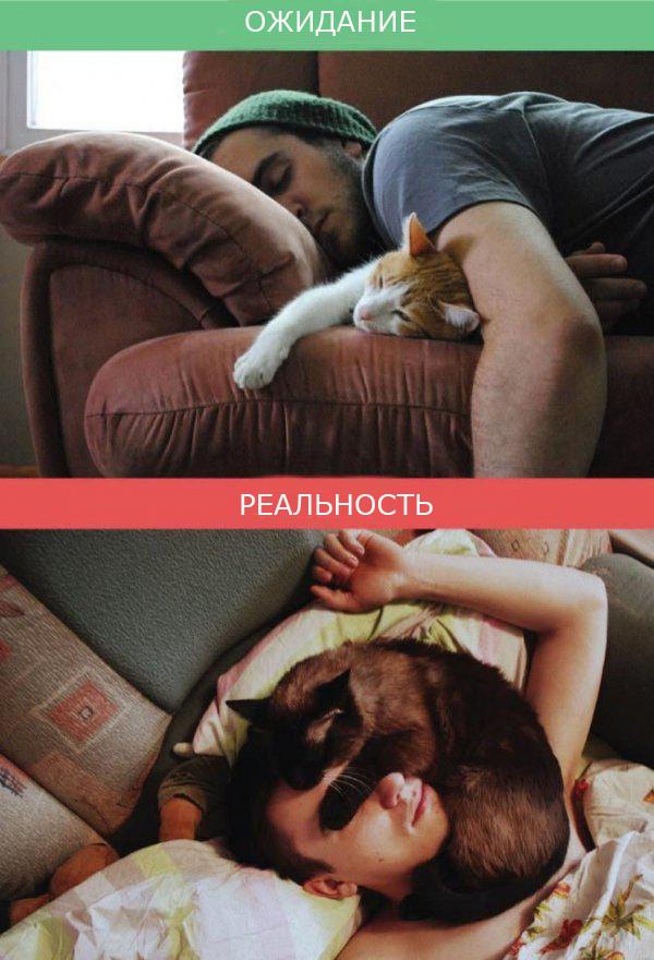 Жизнь с кошкой фото 3