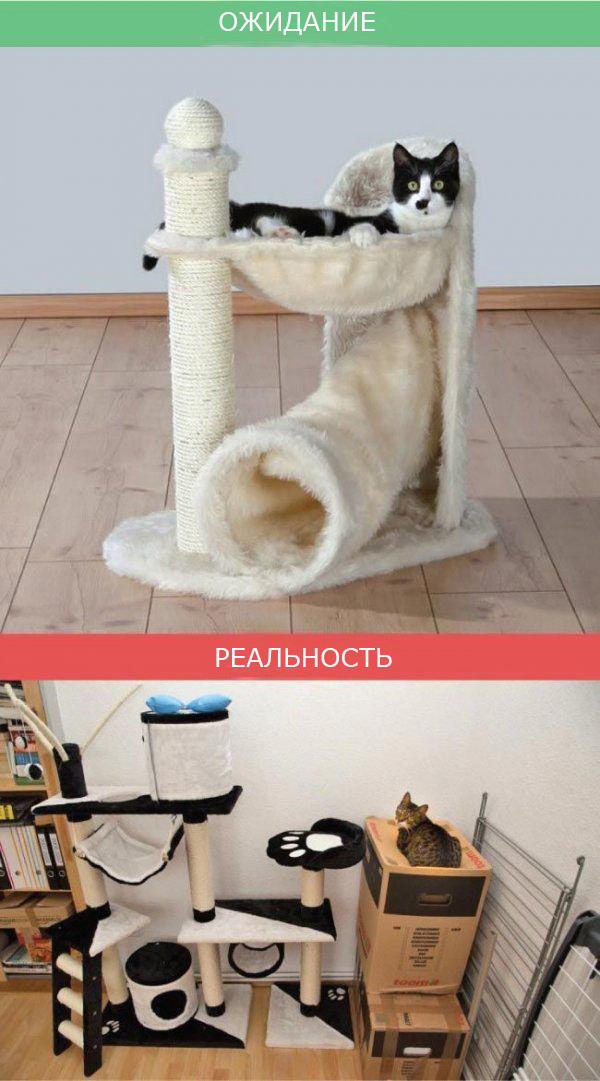 Жизнь с кошкой фото 4