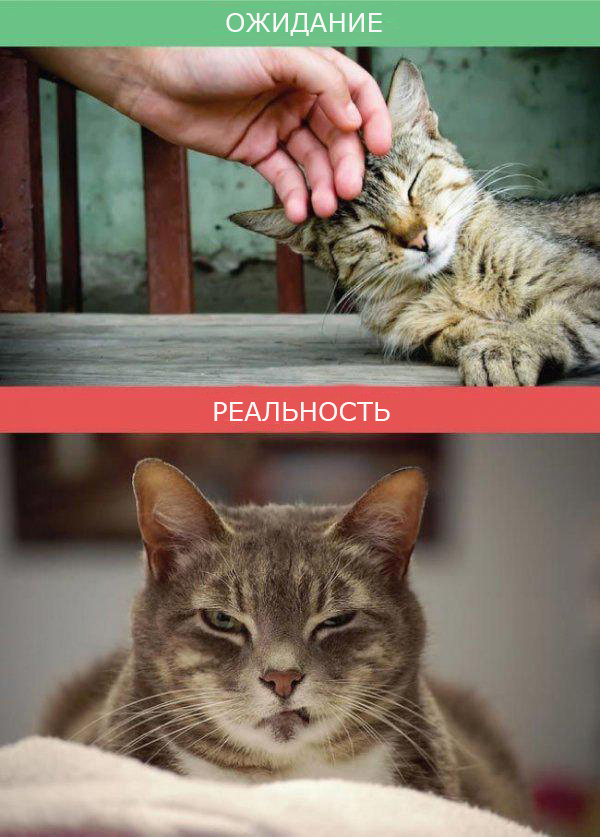 Жизнь с кошкой фото 5