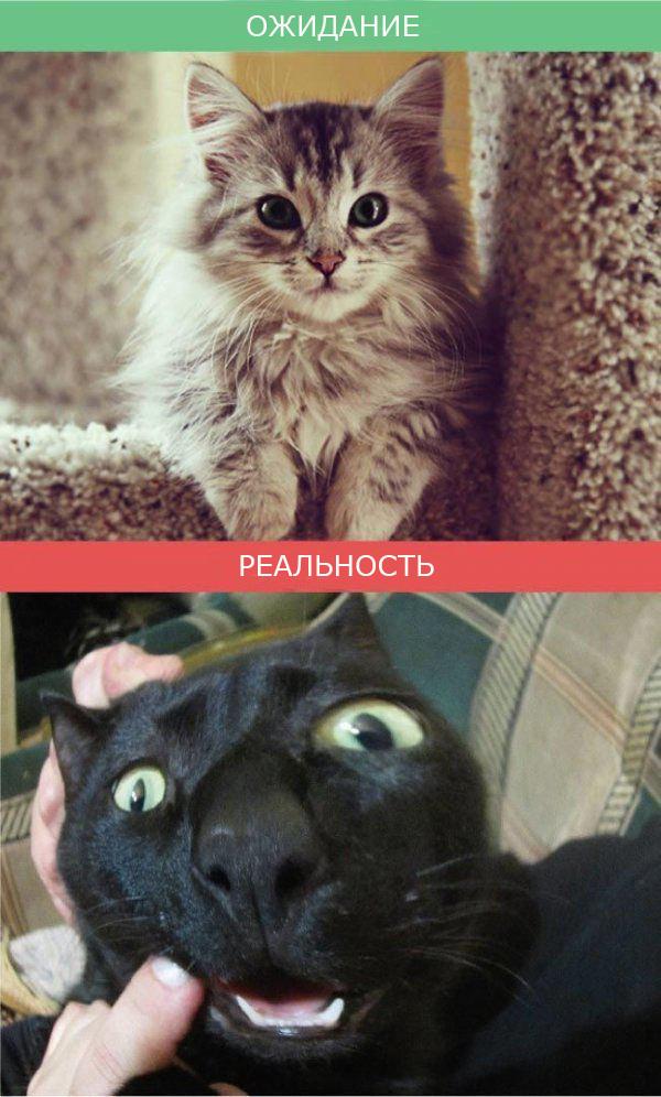 Жизнь с кошкой фото 6