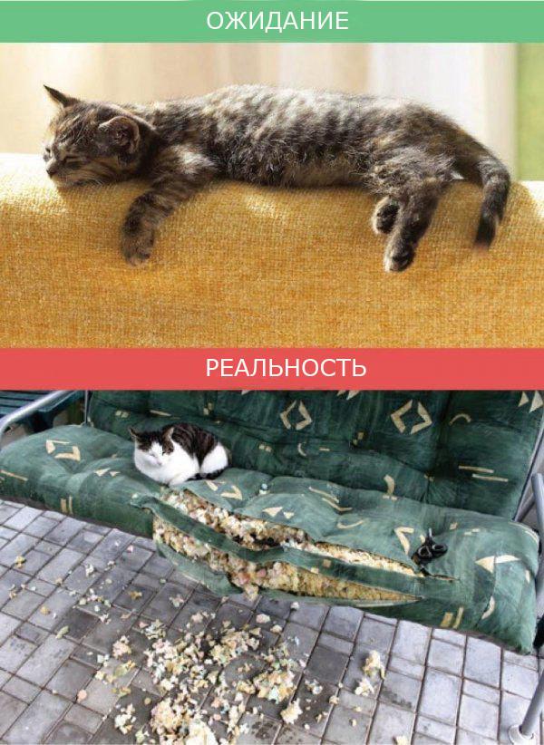 Жизнь с кошкой фото 7