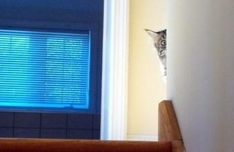 Кот следит за тобой