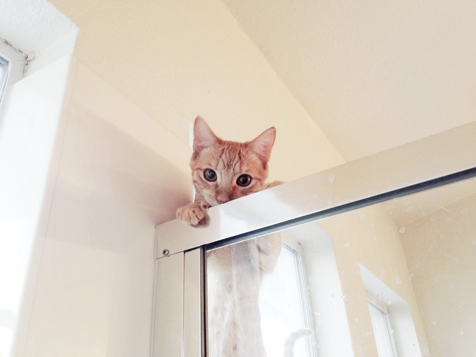 Кот следит 11