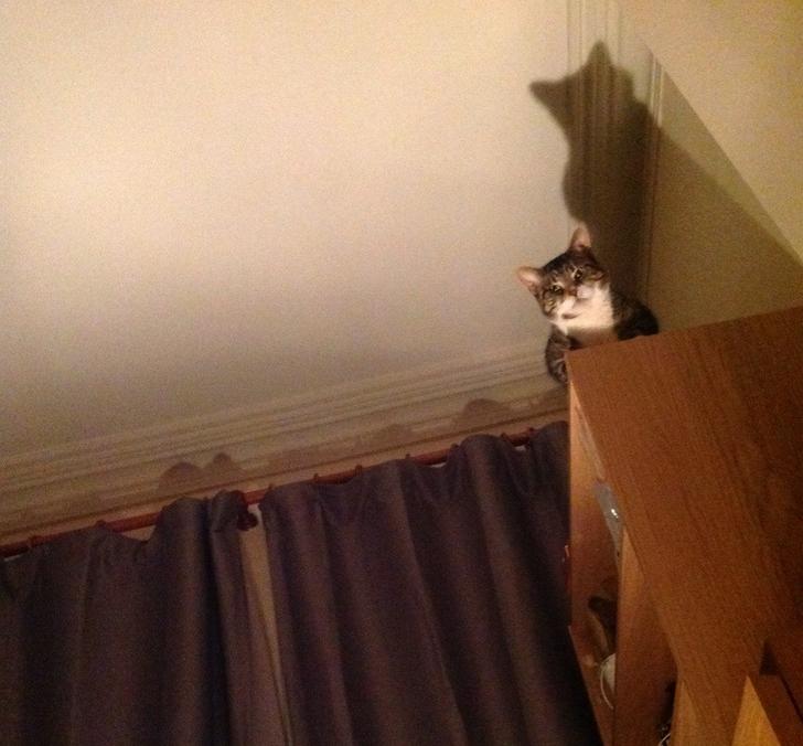 Кот следит 13