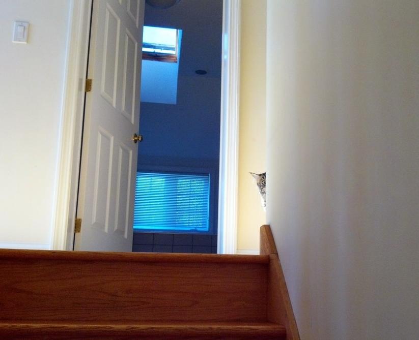 Кот, который следит за тобой