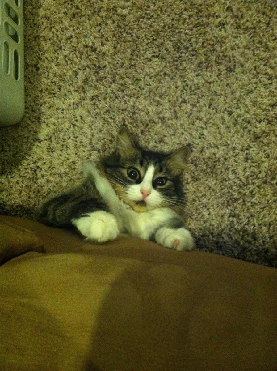 Кот следит 4