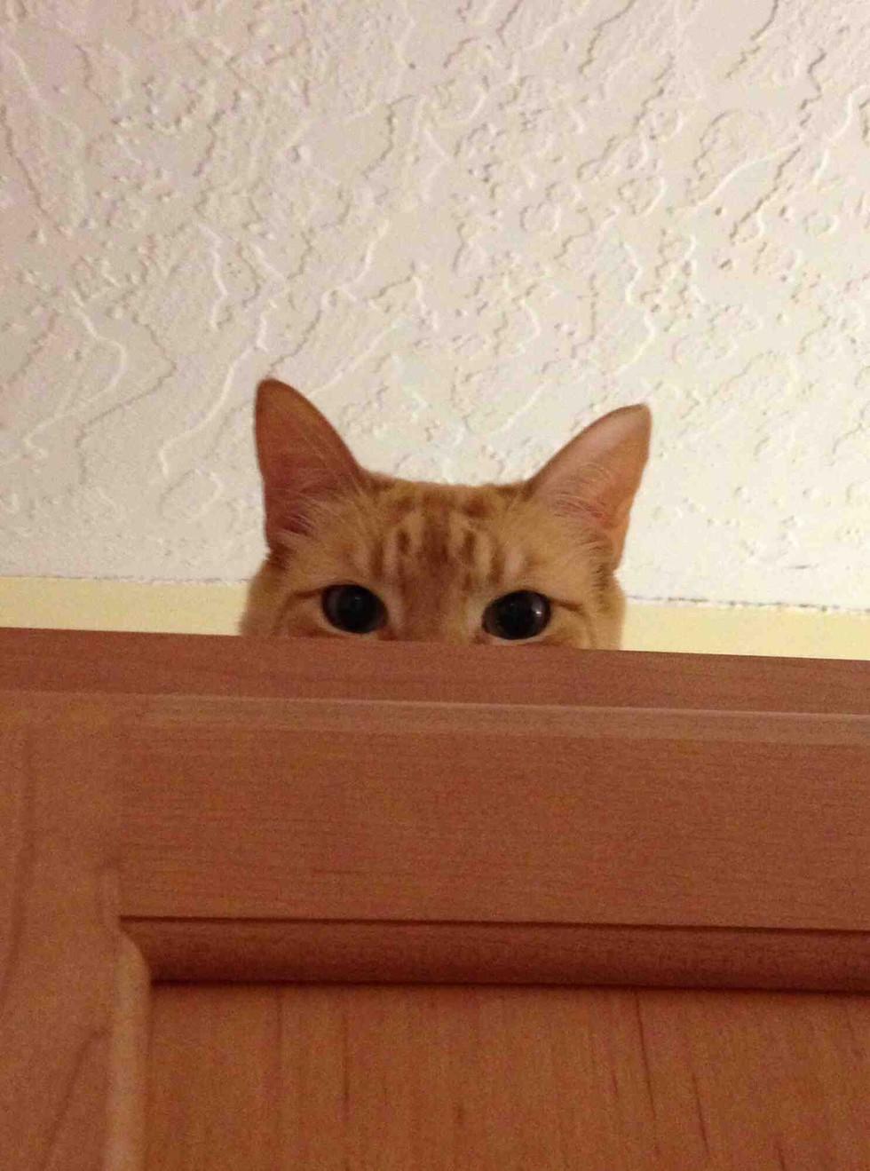 Кот следит 5