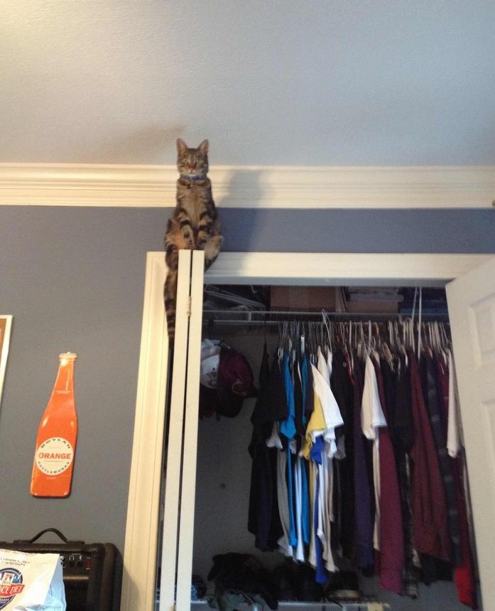 Кот следит 6