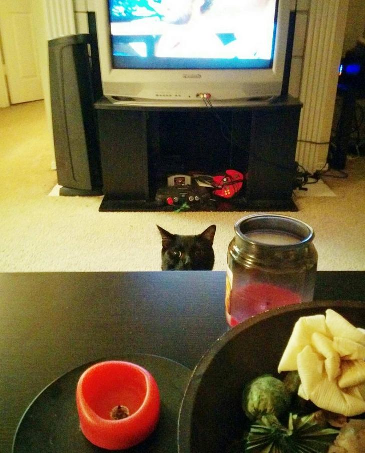 Кот следит 8