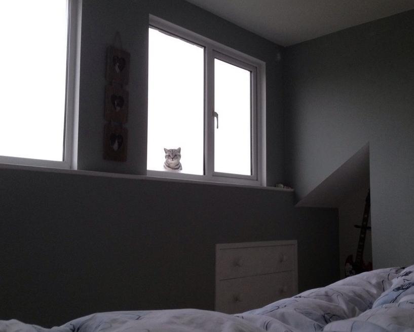 Кот следит 9