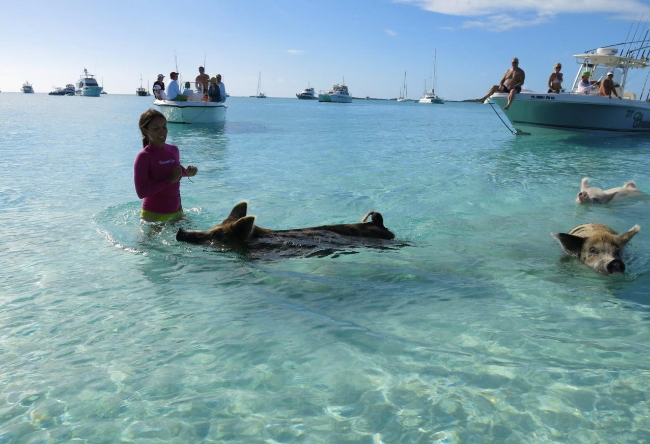 Плавающие свиньи фото 2