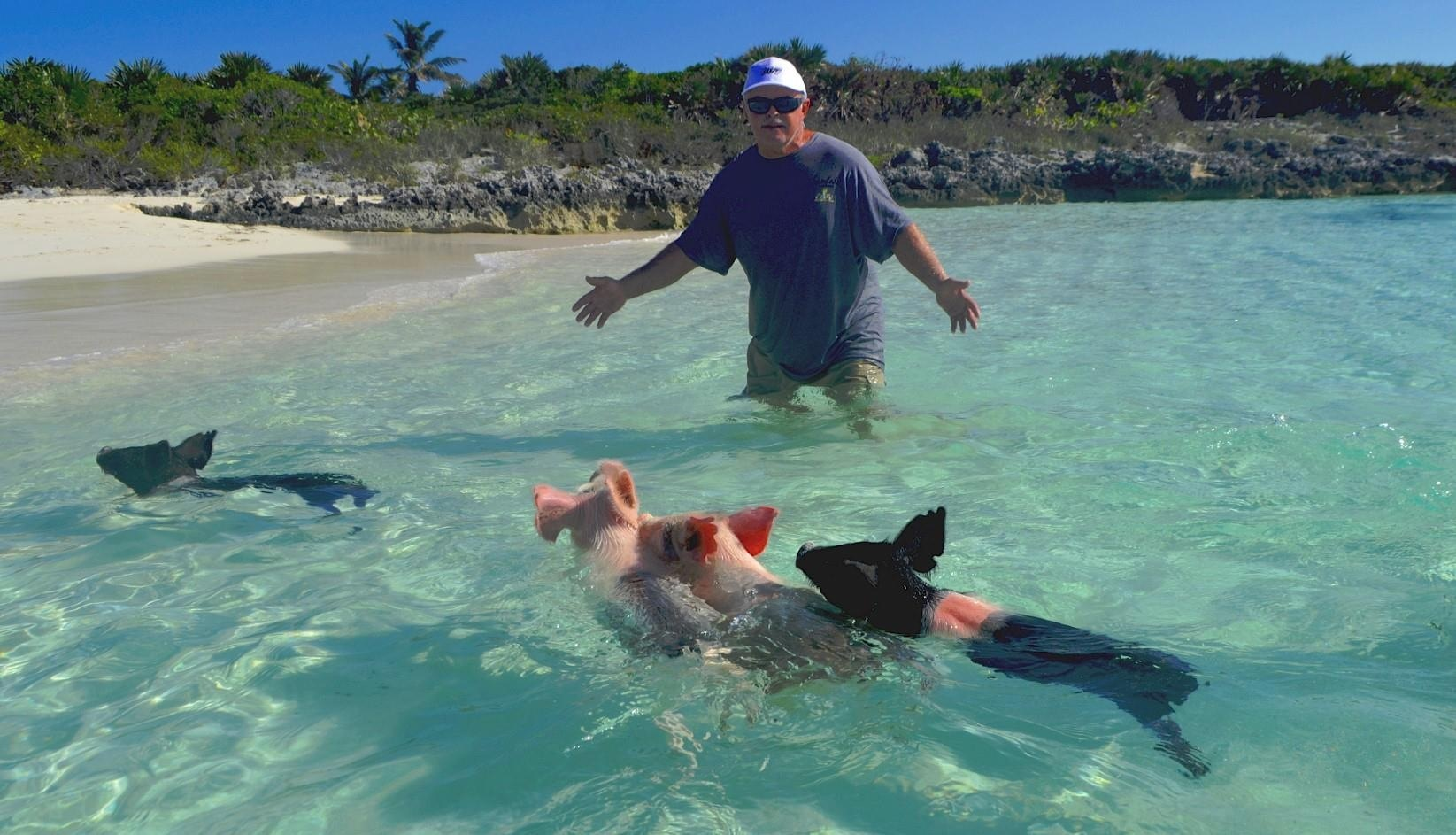 Плавающие свиньи фото 7