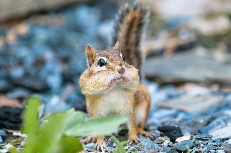 Удивленные животные, фото 10