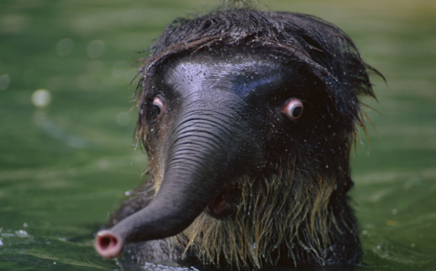 Удивленный слоненок