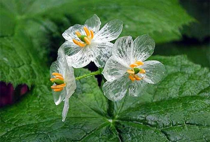 Цветок, прозрачный после дождя