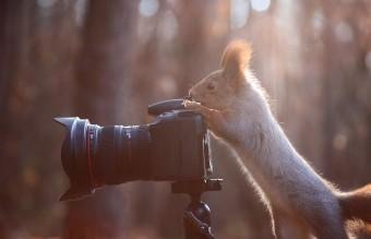 Белка с фотоаппаратом
