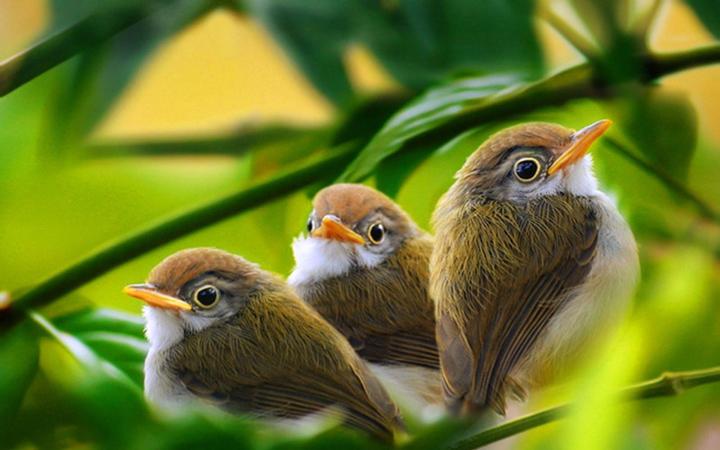 Любопытные птенцы фото