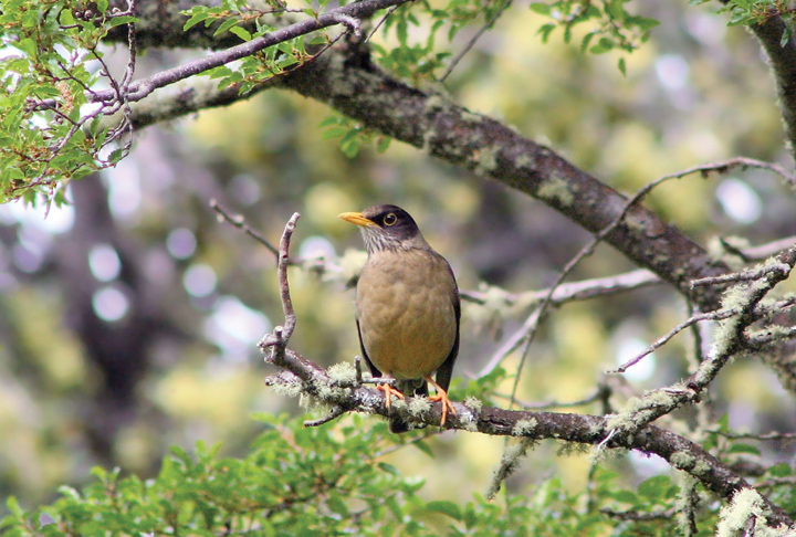 Факт - птицы произошли от динозавров