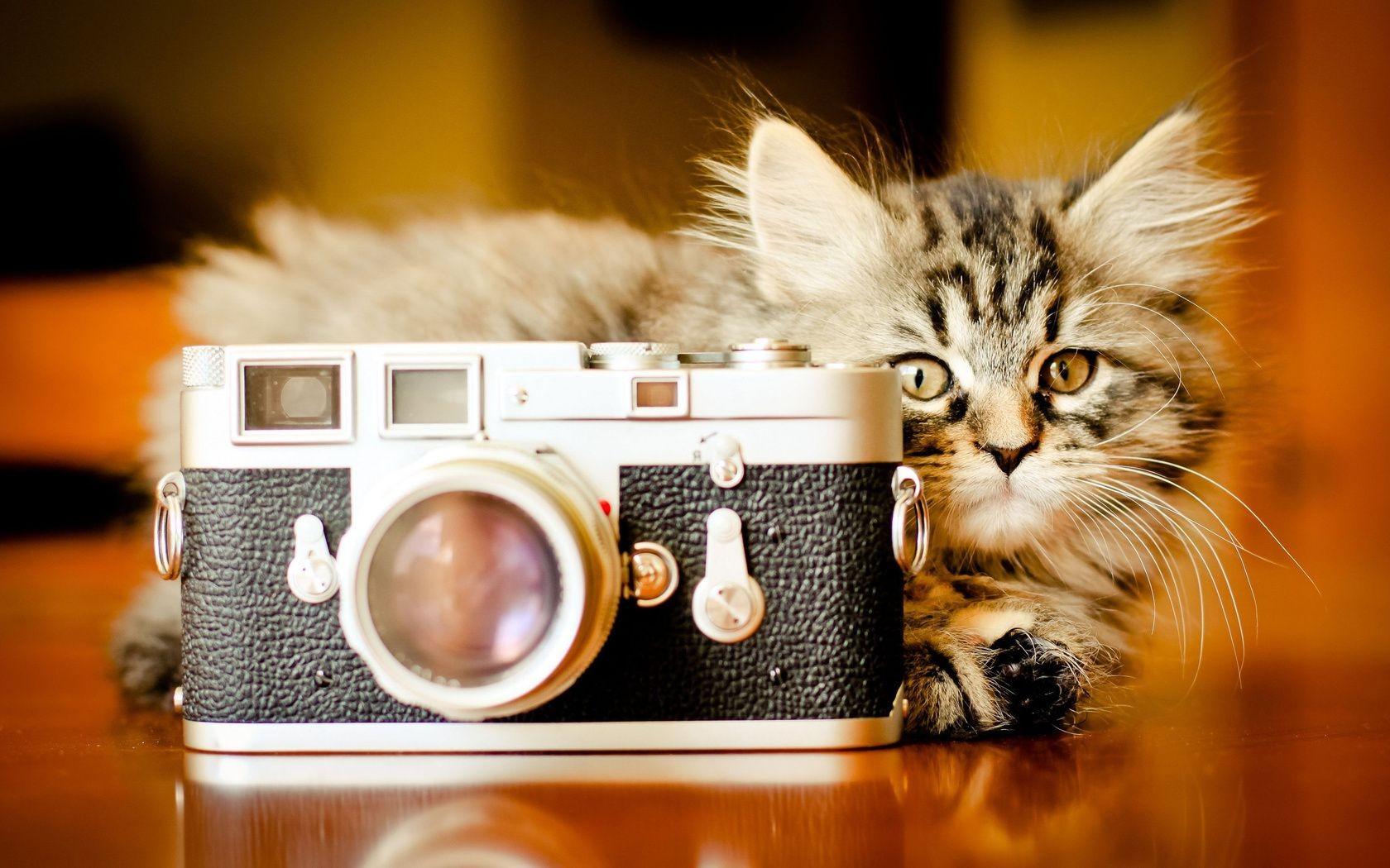 Котенок и фотокамера