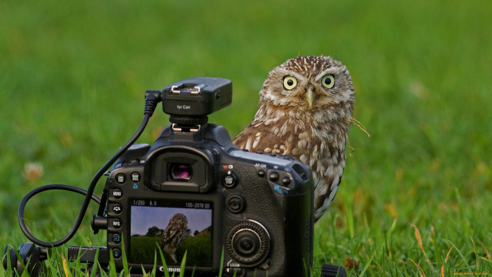 Сова и фотоаппарат